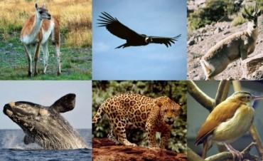 Adiós a los próceres: la fauna, protagonista de los nuevos billetes