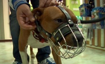 Un centenar de perros de razas consideradas peligrosas ingresaron al registro municipal