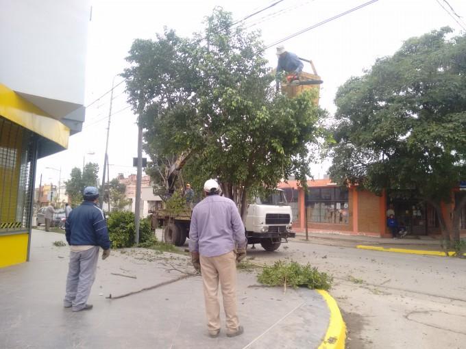 Se realizó la poda de árboles en calle España para la renovación lumínica