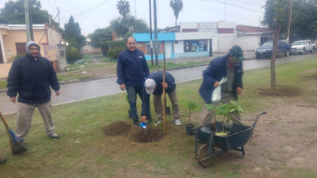 Para reducir la contaminación la comuna planta especies originarias de China sobre avenida Besares