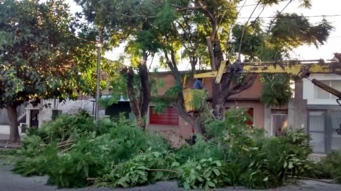 Se realizan tareas de poda de raleo de árboles sobre calle Garay