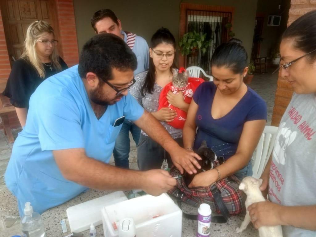 """En apenas dos semanas la campaña municipal """"Atención Veterinaria en tu Barrio"""" alcanzó a más de 500 mascotas"""