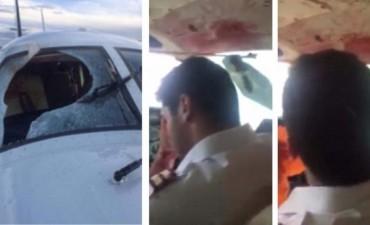 Sangre y plumas: los impactantes efectos del choque entre un avión y un buitre