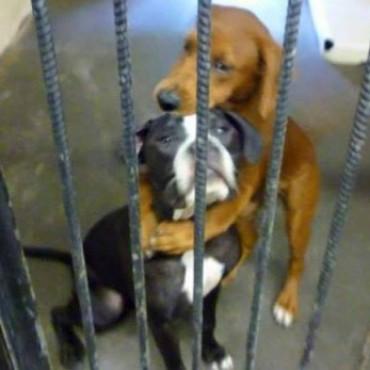 Una foto salvó a dos perritas