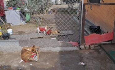 El intendente entregó insumos en el refugio de animales San Fernando