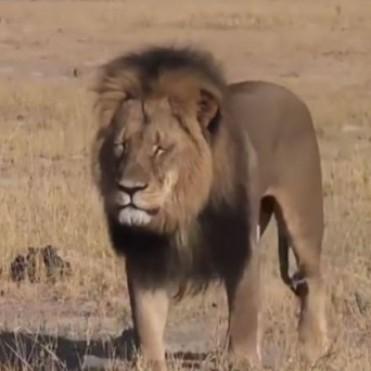 Mató al león más amado de África y ahora es el más odiado de Facebook