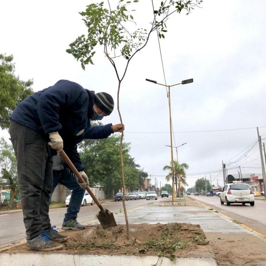 El municipio bandeño refuerza la forestación en toda la ciudad