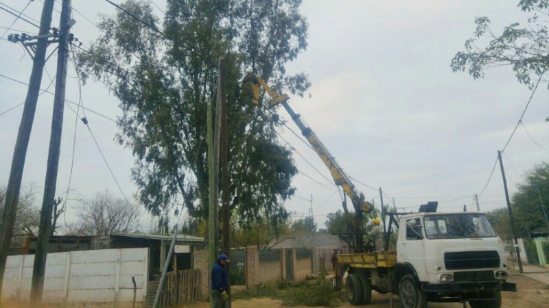 Personal municipal realizó la poda de un eucaliptus que era una amenaza