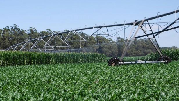Por la baja de la soja, Argentina perdió en dos meses u$s2.200 millones en exportaciones