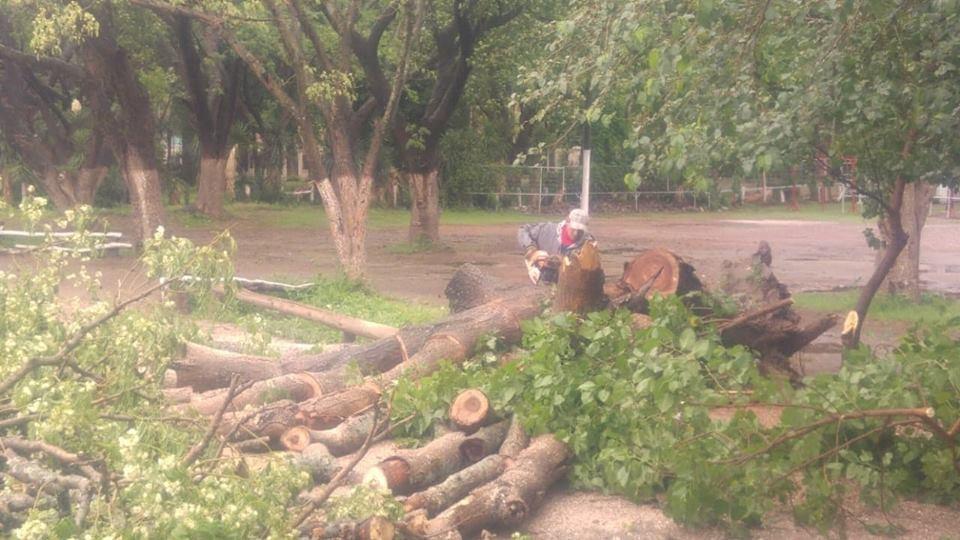 Personal de Parques y Paseos retiró ramas caídas en la autopista