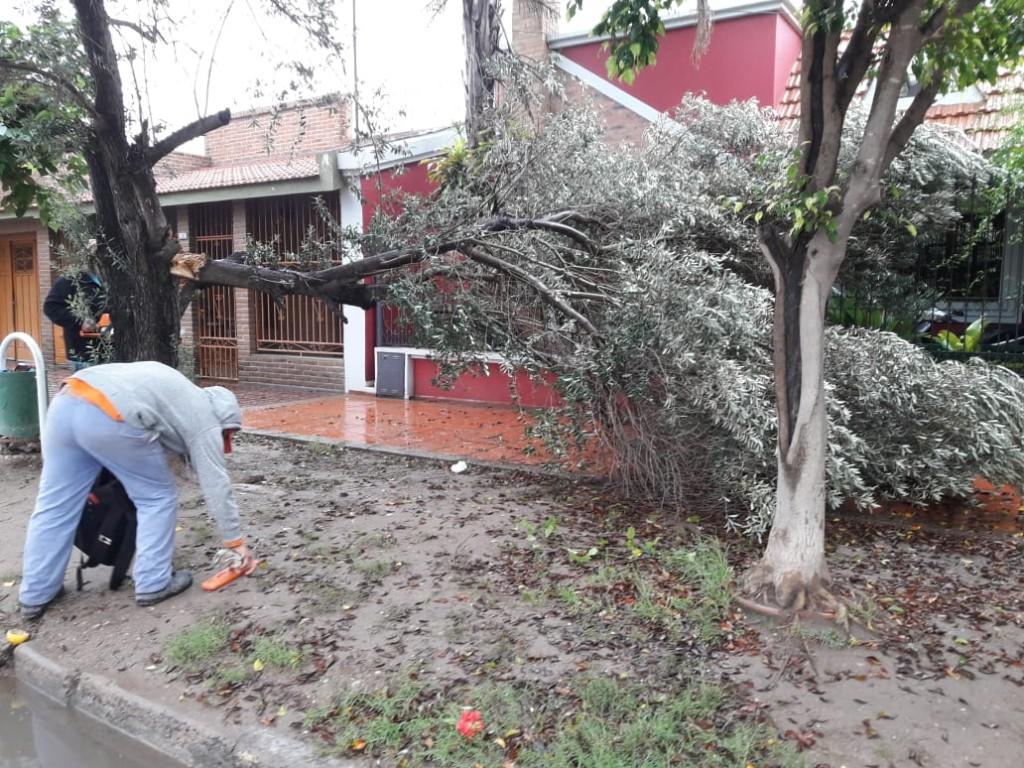 Intenso trabajo en la ciudad para retirar ramas y restos de poda