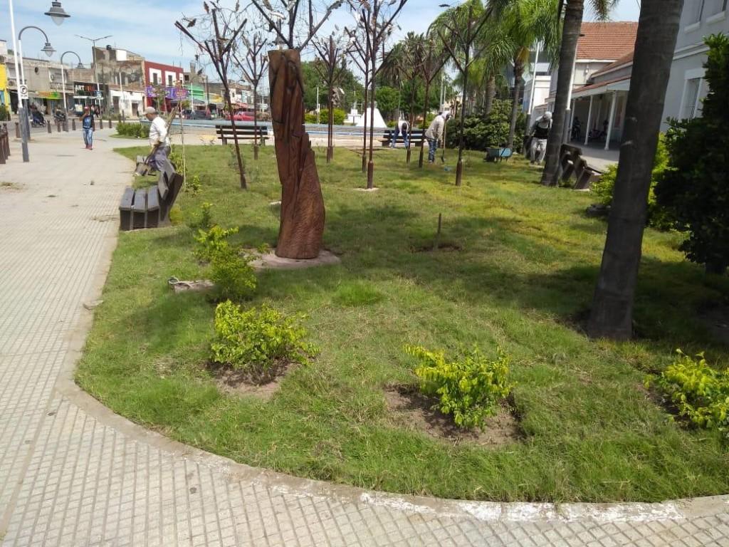 El municipio refuerza el plan de reforestación y cuidado de espacios verdes