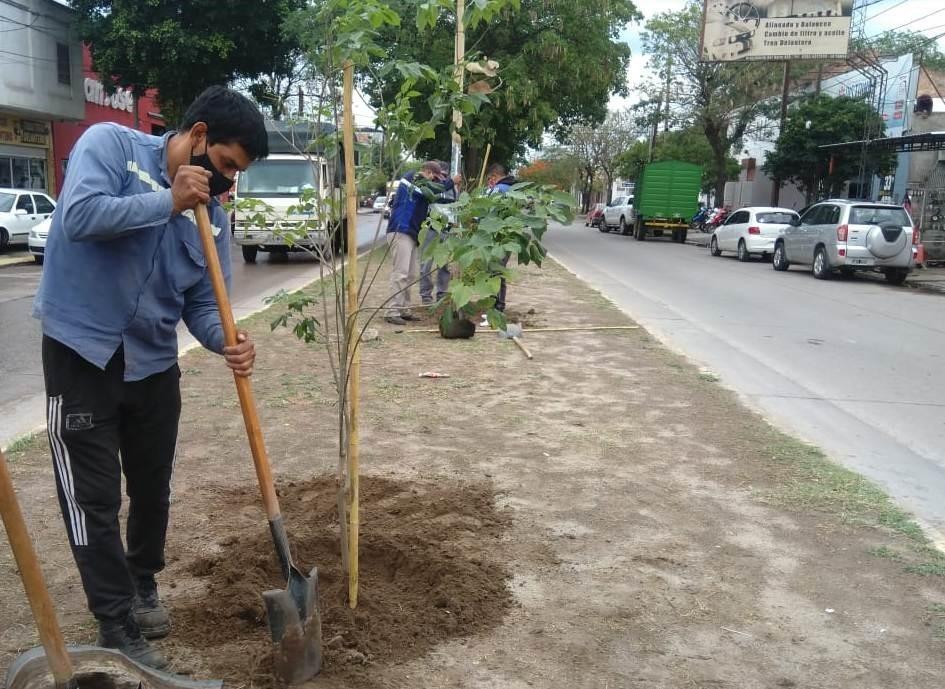 La Municipalidad trabaja para alcanzar la meta de 20 mil árboles plantados en la ciudad