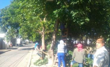 La comuna trabajó en el levantamiento de ramas y poda de árboles