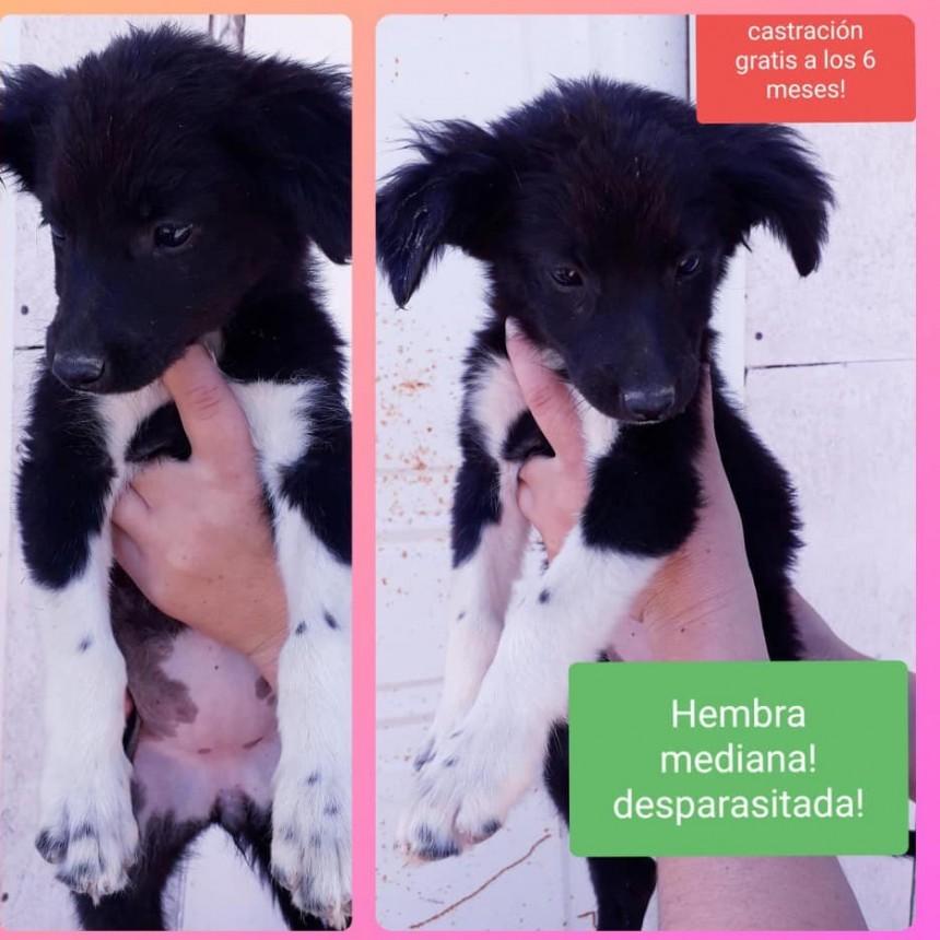 Sanidad Animal ofrece cachorros en adopción y piden conciencia para su cuidado